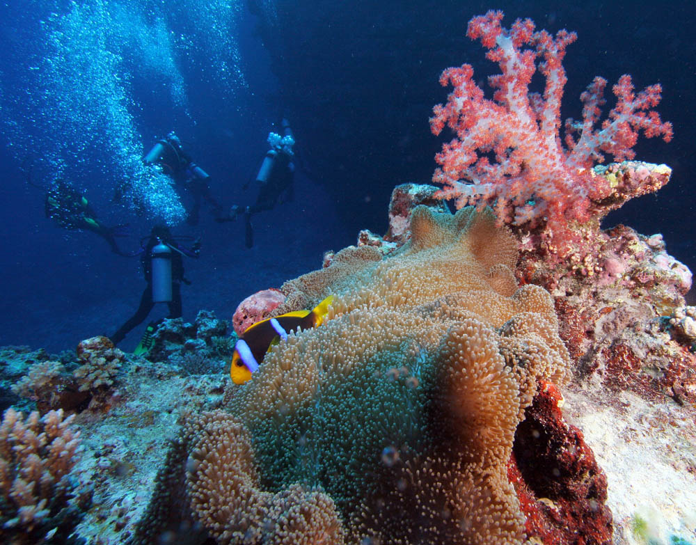 divers, soft coral and clownfish photo