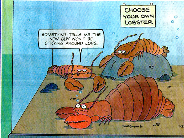lobster cartoon