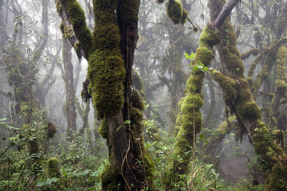 Rain forest on the lower slopes of Mt Kilimanjaro