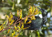 tui thumbnail photo